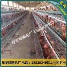 蛋鸡饲养笼具铁丝网 出口尼日利亚家庭式养?#36710;?#40481;鸡笼