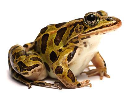 青蛙亿酷棋牌