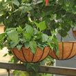铁艺椰棕花盆创意多肉植物绿萝吊兰垂吊花盆圆形大号吊篮花盆批发