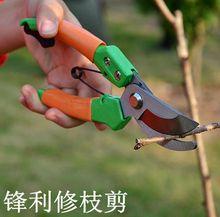 240高级修枝剪园艺工具剪刀剪花剪刀弹簧果剪剪刀花剪