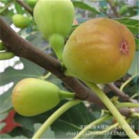 База оптовые продажи Садовое фруктовое дерево без Цветочное саженец без Выживаемость цветочных фруктовых деревьев высокая Больше скидка