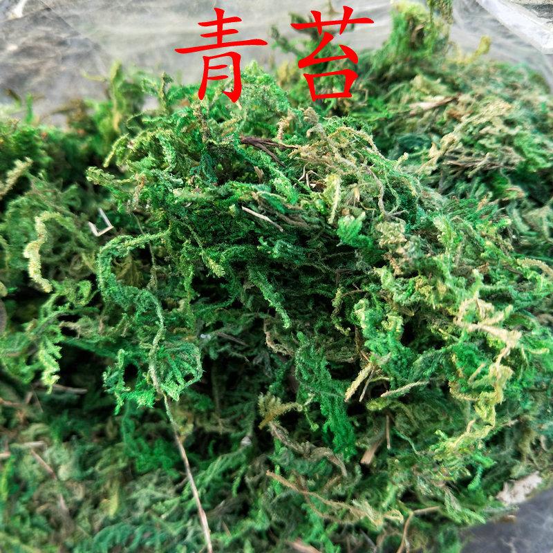 8821 青苔 植物水苔铺面苔藓 青苔藓 植物盆栽装饰绿色苔藓干
