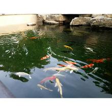 科旭达直销黄石市阳新县鱼池净化设备庭院花园鱼池过滤水清澈洁净