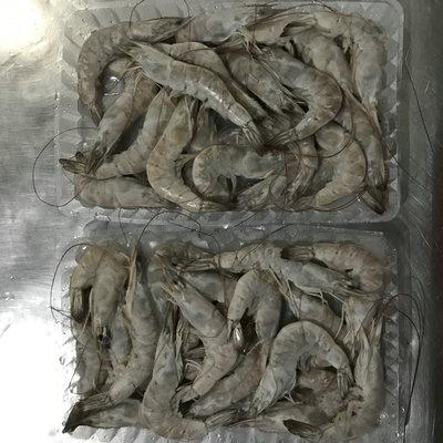 冷冻南美白对虾,加工南美白对虾,河北南美白对虾,唐山南美对虾