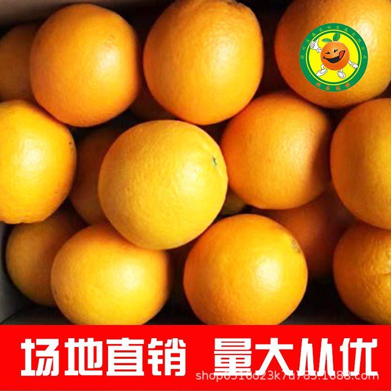 赣南脐橙 现摘甜95-100mm优质大果新鲜水果特产果园直销 批发代理