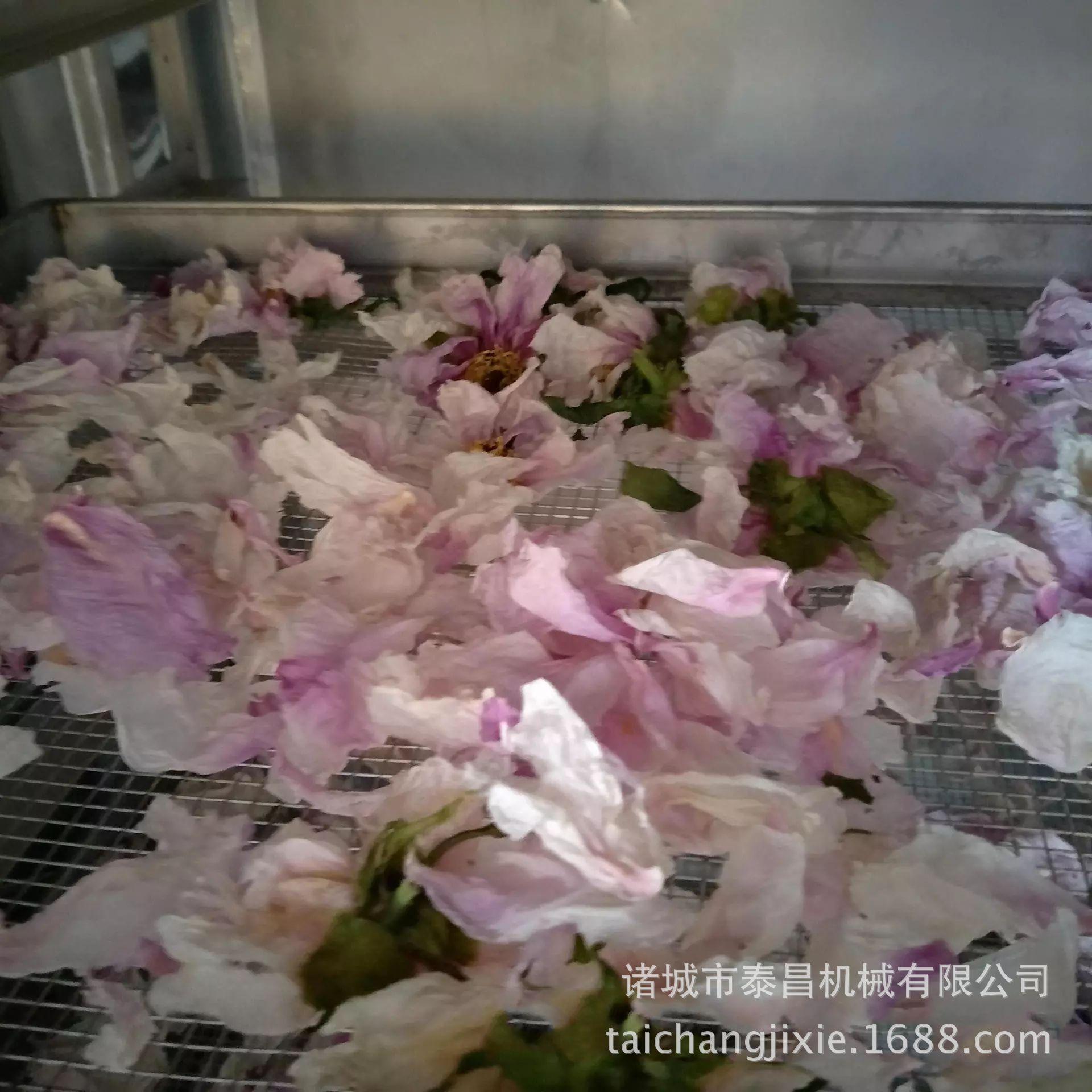 新型箱式烘干房熱風循環脫水蔬菜烘干箱食品烘干機商用菊花烘干機