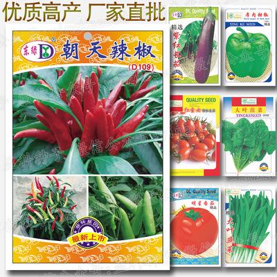 朝天辣椒种子(100粒/袋)蔬菜种子批发 辣椒 朝天椒 指天椒种子