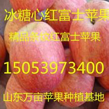 河南苹果批发产地市场价格行情烟台栖霞冰糖心红富士苹果批发价格