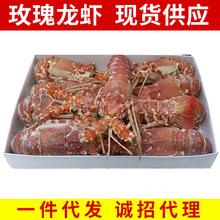 新品批发 莫桑比克海虾 冷冻玫瑰龙虾 冰鲜龙虾 海鲜水产食品