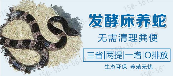 发酵床养蛇