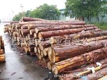 优质供应桧木原木 台湾桧木 加拿大桧木批发 口径10-38cm