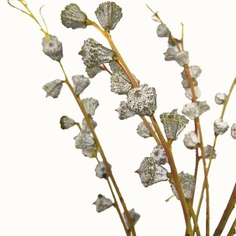 Bạch đàn quả xanh khô hoa khô hoa khô trang trí nội thất Bắc Âu DIY hoa chéo trái cây bán buôn