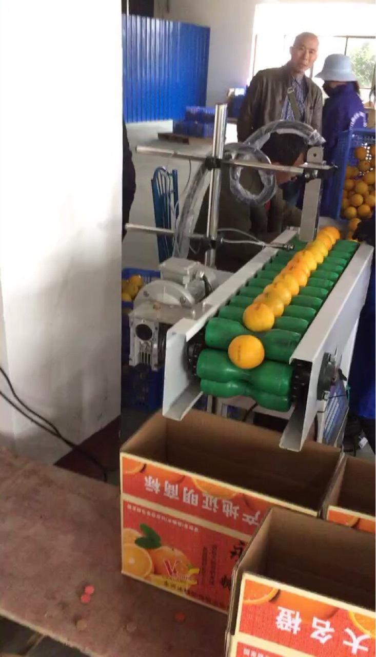 永兴冰糖橙打码机