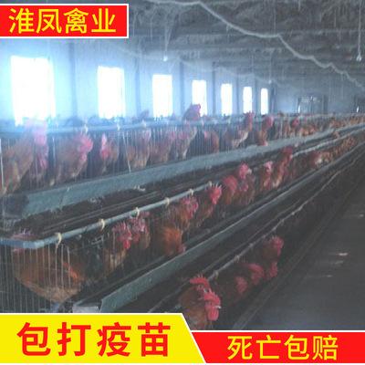 淮南厂家出售蛋鸡苗、草鸡苗、淮南王、土鸡苗、蚌埠鸡苗