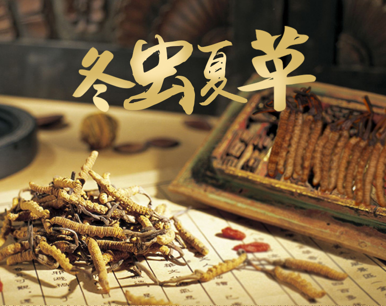 Cordyceps sinensis details page.-1_01