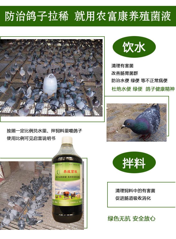 鸽子拉稀益生菌