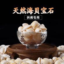 八供七寶石小海螺貝殼佛教裝藏用品佛像佛塔裝藏供曼扎盤一兩價格