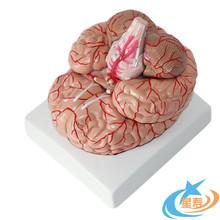 进口模具人体大脑解剖模型脑动脉模型脑模型人体解剖模型可拆卸
