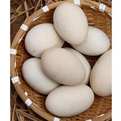 至顺 白洋淀大雁蛋 4枚*120g 雄安特产 咸鸭蛋松花皮蛋厂家批发