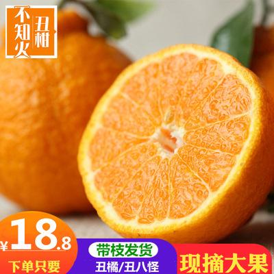 抢购18元试吃 四川丑橘丑八怪新鲜水果丑柑橘应季桔子橘子丑柑