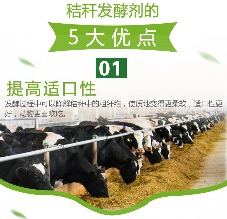 发酵秸秆喂牛.jpg