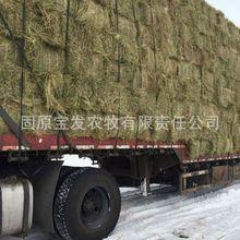 今年新草 馬場羊場牦牛專用牧草 養殖場專用飼草羊草堿草