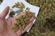 吐鲁番绿香妃葡萄干  中大颗粒绿香妃 产地直销 大量批发