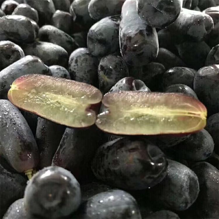 甜蜜蓝宝石葡萄苗 新品种长粒葡萄品种 无核脆甜 品种好正