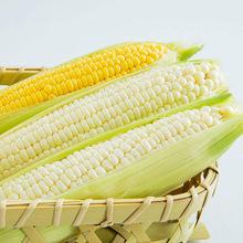 速冻黄色玉米 20cm大甜糯玉米 粗粮棒子批发 60根/箱
