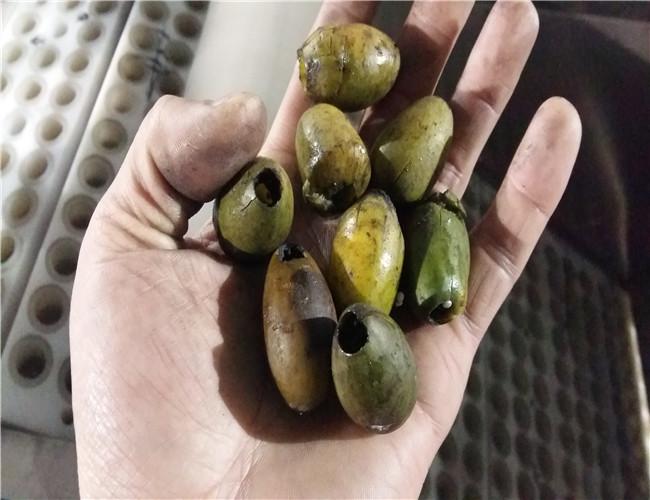 橄欖去核機
