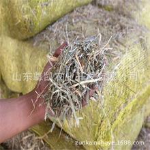 青干草 滨州厂家供应牛马羊禽畜等食用 青干草 适口性强欢迎选购