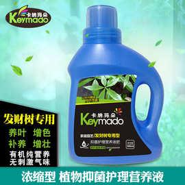 卡纳玛朵发财树专用植物营养液家庭园艺盆栽液体有机肥料增色促长