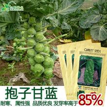 孢子甘藍種子 抱子甘藍菜園高產易種耐寒中熟抱子甘藍籽 蔬菜種子