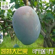四川攀枝花凯特芒果5斤9斤新鲜当季水果大青芒应季水果