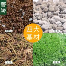 菁娇 苔藓微景观diy材料包 微景观瓶制作营养土轻石水苔