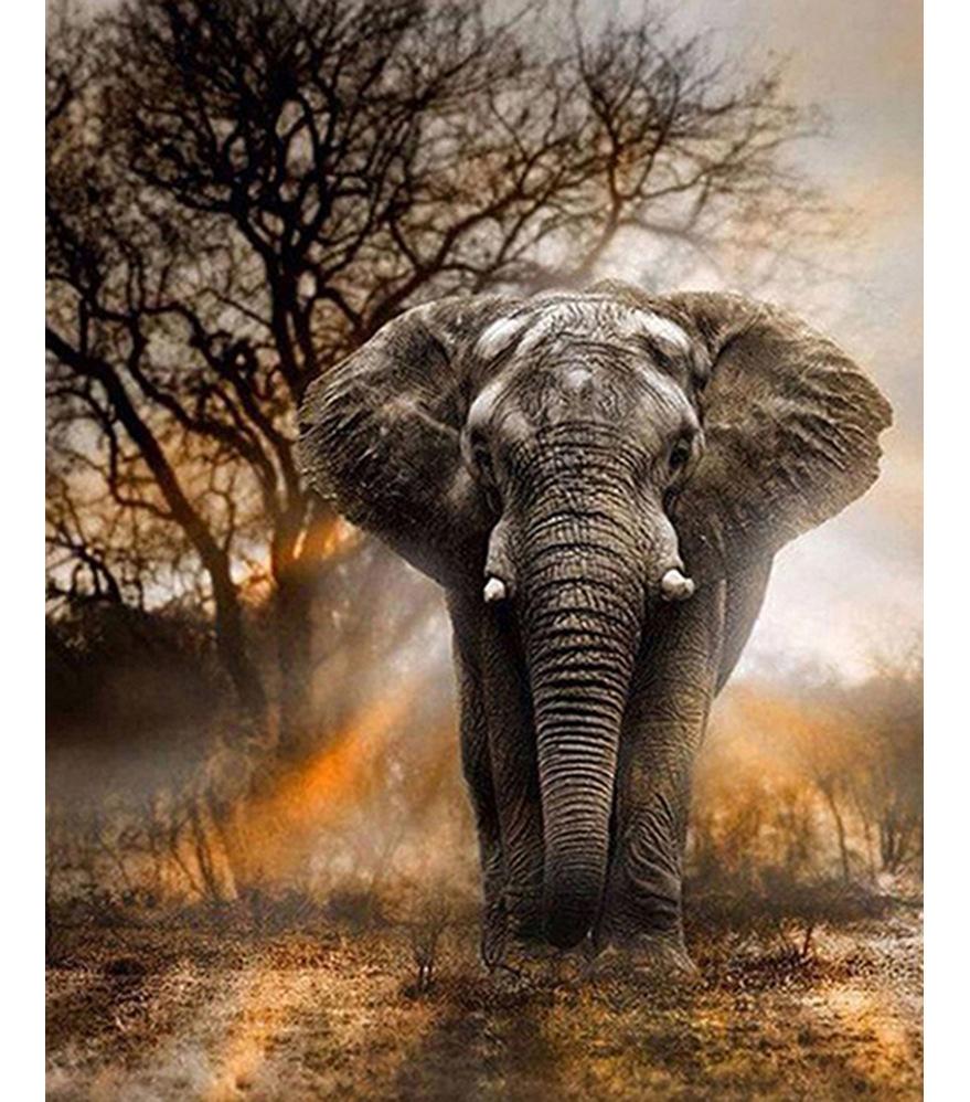 跨境专供 diy非洲大象钻石画满钻装饰画 客厅 卧室 5d亚马逊爆款
