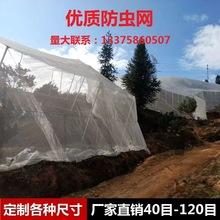 40目防虫网丝网窗纱大棚罩花卉园林果树过滤纱网尼龙网塑料网