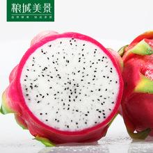 【伙3】越南白心火龙果1斤   当季新鲜水果孕妇现摘现发