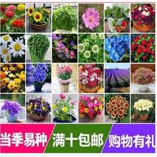 花种子套餐四季种易活室内阳台盆栽绿植当季易种植物庭院花卉花籽