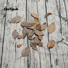 標本樹葉枯干花楓葉假枯葉裝飾仿真落葉道具 干干花diy手工真葉子