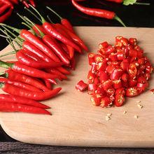 餐飲生鮮紅辣椒 新鮮貴州遵義朝天椒  廠家直銷 批發零售