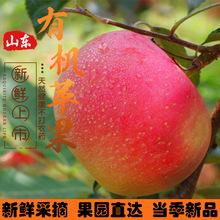 批发新鲜苹果当季红富士苹果5斤10斤 80mm生鲜水果脆甜基地山东