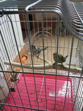 宠物鸟站杆 鹦鹉站杆 八哥站杆 仓鼠龙猫松鼠原木树枝站杆立杆
