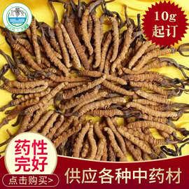厂家现货直销西藏那曲玉树冬虫夏草 多规格中药材虫草散装批发