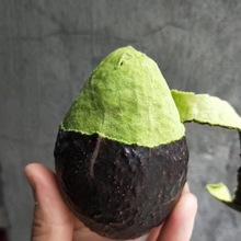 牛油果墨西哥进口牛油果6个装宝宝辅食 新鲜当季水果大果鳄梨代发