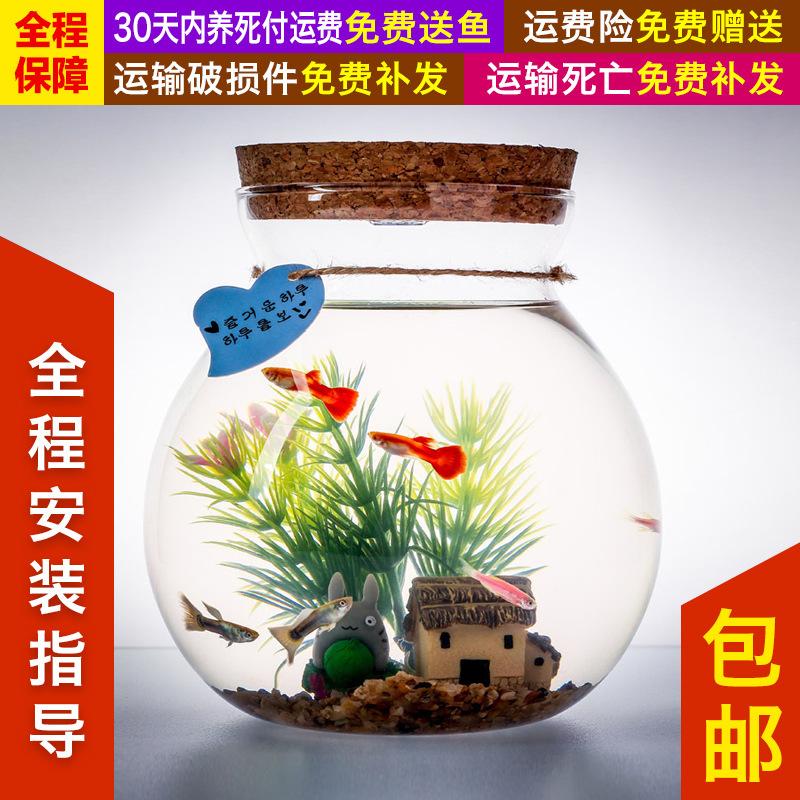 创意新款水族箱玻璃生态瓶迷你微景观活体斗鱼宠物桌面鱼缸