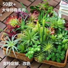 50款+多肉植物花头 仿真创意DIY用品绿色植物墙用品仿真装饰