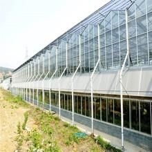 临沂完工玻璃温室大棚效果图 智能玻璃板温室大棚建设厂家