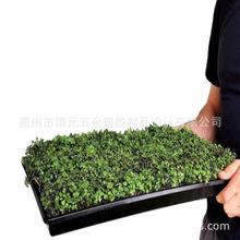 大批生产大型绿化工程户外种植塑料花盆水培种植箱耐酸碱抗UV