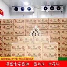 河南灵宝昌盛宝菇专业定制优质高产菌种菌棒厂家长期供应批发
